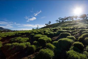 Visite privée d'une journée: les points forts des Highlands au...