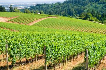 Luxury Group Wine Tour of Willamette Valley