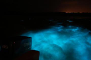 Luminous Lagoon-Night Tour