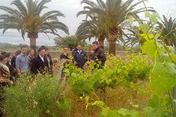 Mallorca Half Day Private Wine Tour...