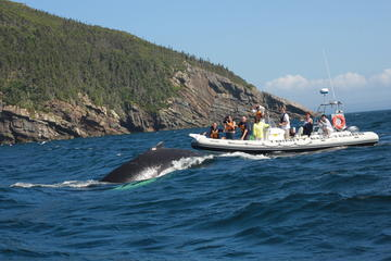 Trinity Bay Whale Watching Tour