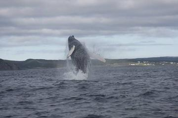 Whale-Watching Marine Wildlife...