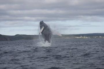 Whale Watching Marine Wildlife...