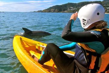 Byron Bay-Kombi: Hinterland-Tour, Minyon Falls, Kajakfahrt und Delfine