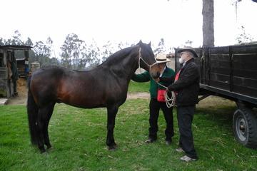 Excursión privada de equitación con almuerzo incluido