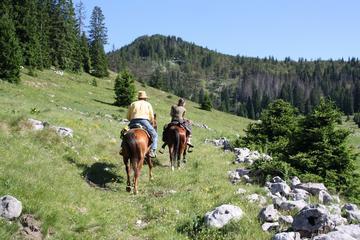 Velika Plana Valley: Full Day Horseback Riding Experience