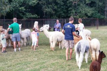 Book Alpaca Farm Tour in Adairsville Georgia on Viator