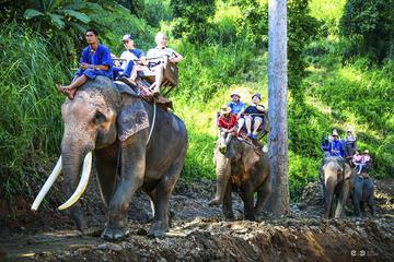 チェンマイからの象乗りとラフティングの終日コン…