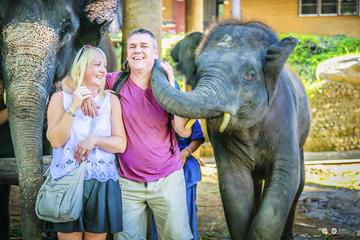 Excursion d'une journée complète avec safari à dos d'éléphant au camp...