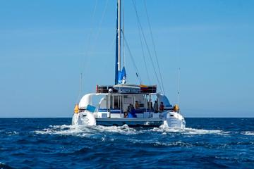 Galapagos Islands Cruise: 4-Day Catamaran Sail Aboard the 'Nemo I'
