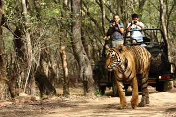 03 Days Private Wildlife Ranthambore Tiger Tour from Jaipur
