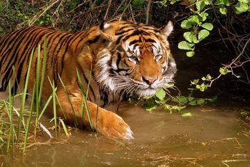 8-Day Private Golden Triangle Tour with a Ranthambore Wildlife Safari...