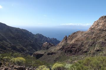 Private Tour of The Real Tenerife