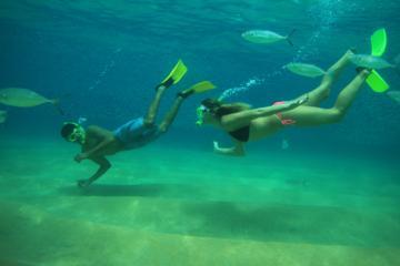 Excursión de buceo de superficie...