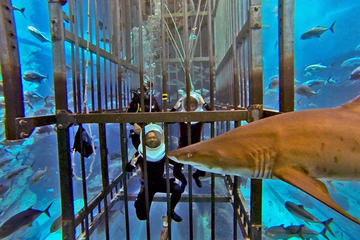 Shark Walker Experience at Dubai...