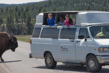 Day Trip Buffalo Safari Van - Small Group Tour near Rapid City, South Dakota