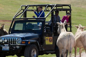Book Custer State Park Safari Jeep Small-Group Tour on Viator