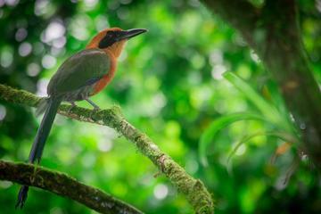 Birdwatching Tour at Arenal Natura Ecological Park