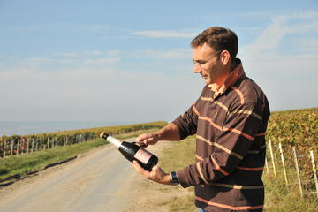 Champagne Region Vineyard Tour from Reims