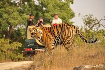Multi-Day Jaipur Ranthambore National...