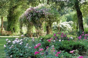 Visite de la roseraie de Saumur