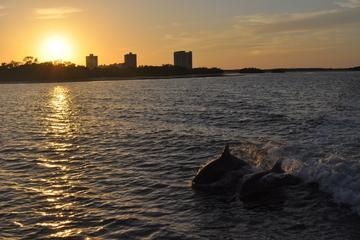 Fort Myers Dolphin and Shelling Cruise at Sunset