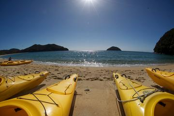 Full-Day Abel Tasman Kayak and Walk