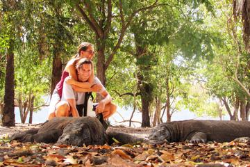 3-day Komodo National Park tour from ...