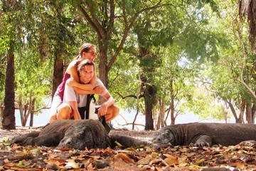 3Tage Nationalpark Komodo: Tour ab...