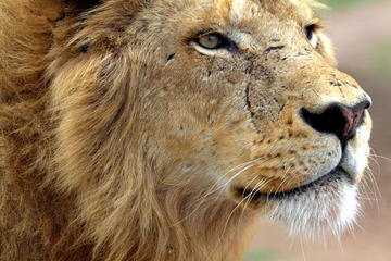 Lion Park Safari Guided Day Trip from...