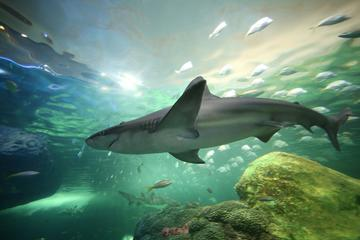 Book Ripley's Aquarium of Canada in Toronto on Viator