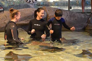 Ripley's Aquarium of Canada: Stingray Experience