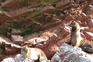 Excursión de día completo a las Islas Ballestas, incluida la reserva...