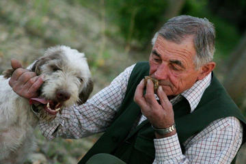 Truffles Hunting in Alba and Local Delicacies Tasting