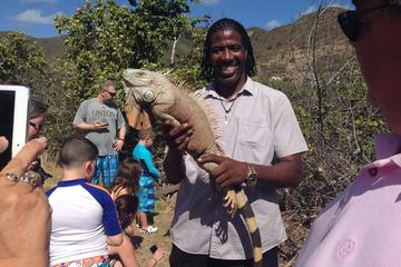 Kustexcursie op Sint Maarten: Orient ...