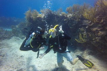 Discover Scuba in Cenote and Ocean...
