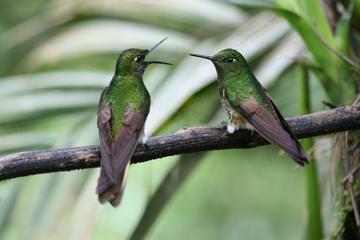 Excursion de deux jours avec observation des oiseaux, fermes de cacao...