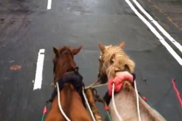 Dhaka Horse-Drawn Carriage Tour