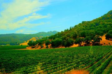 Excursión a la región vinícola del Valle de Napa