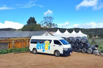 Half-Day Premium Waiheke Wine Tour