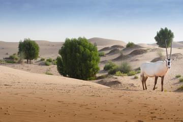 Abu Dhabi Telal Resort Desert Safari Private Tour with Dinner