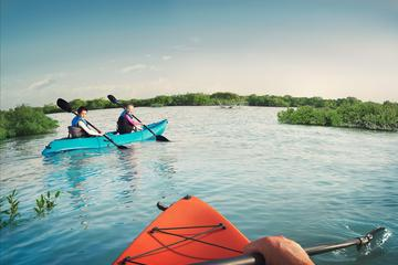 Guided Tour Kayaking Eastern Mangrove Abu Dhabi