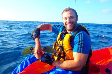 Half-Day Kayaking and Fishing Experience from Tauranga