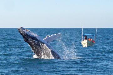 Expedición de avistamiento de ballenas en Mazatlán