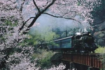 Day Trip to Experience the Steam Locomotive Train and Cherry Blossom Viewing from Tokyo
