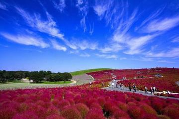 Day Trip to Hitachi Seaside Park and Ami Premium Outlet from Tokyo...