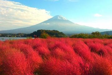 Mt Fuji and Lake Kawaguchi Day Trip with Grape Picking and the Oshino...