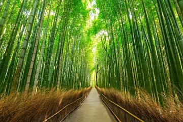 Private Full-Day Charter Tour: Kyoto, Osaka, and Nara Sightseeing from Kyoto