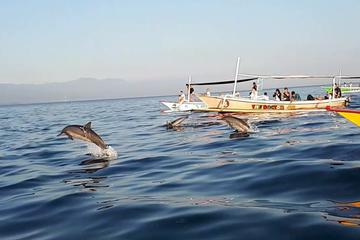Bali Dolphin Sunrise Tour