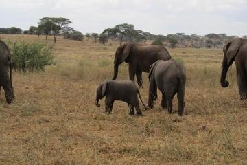 6jours de safari-camping: lac Manyara, Serengeti, cratère de...